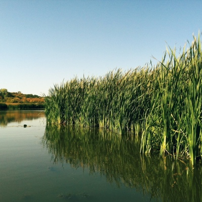 chain-of-lakes-state-park-reeds